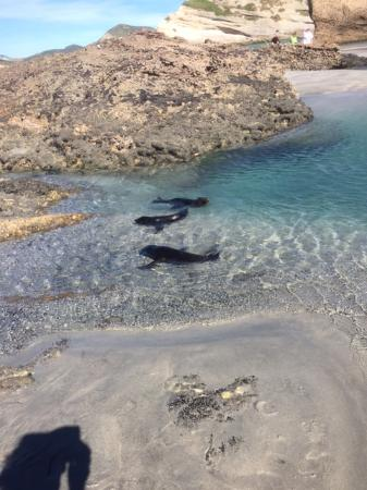 The Innlet Backpackers and Cottages: seals at wharariki beach, Farewell Spit