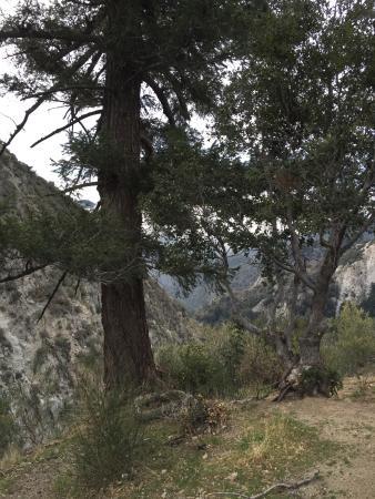 Mt Wilson MTB Adventure