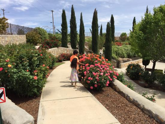 El Paso Municipal Rose Garden, April 5, 2015