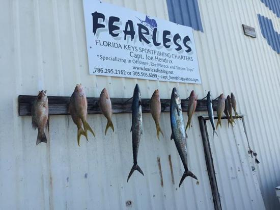 Fearless Fishing Charters: Our catch for the day. Lots of variety and tons of fun.