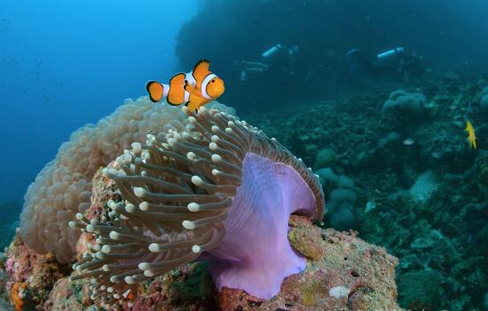 Flip Flop Divers : we found nemo