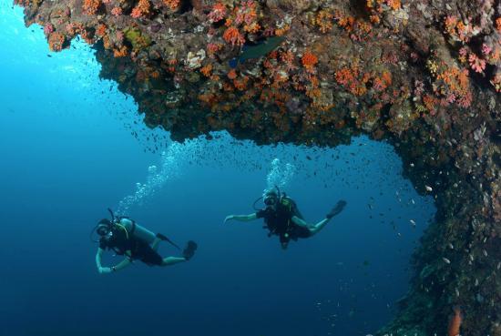 Flip Flop Divers: cruising