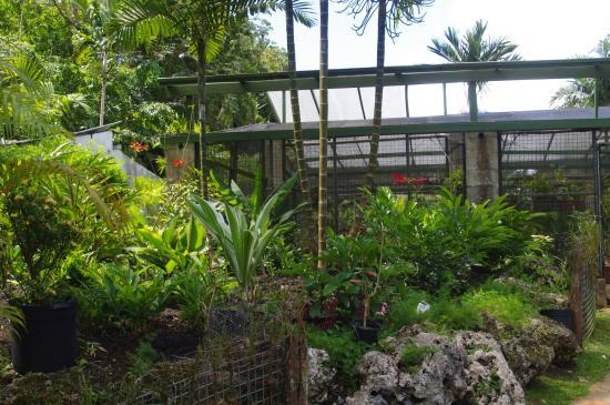 Saint George Parish, Barbados: Other plants in th gardens