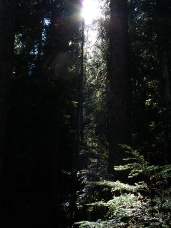 Pemberton, Canada: There is also a dense forest