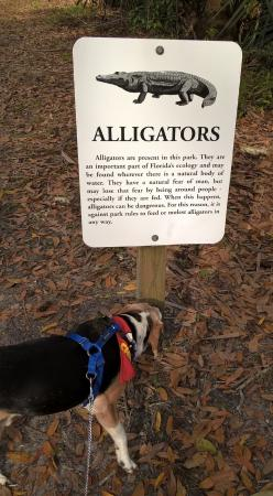 Sebring, FL: Sign about the alligators, but don't worry they don't attack the tourists.