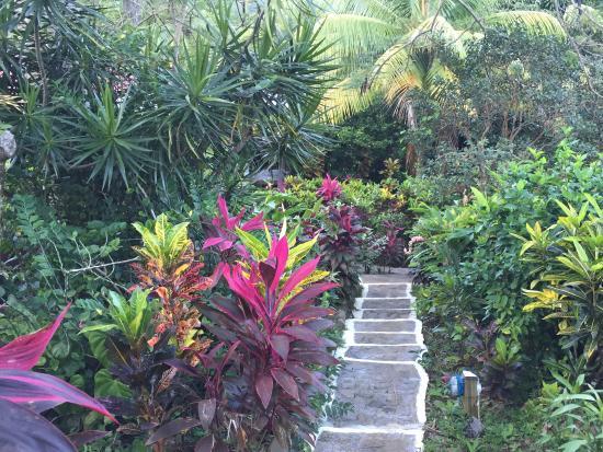 Marigot, Dominica: Från vårt rum 2