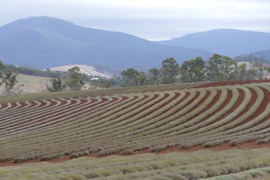 Zdjęcie Tasmania