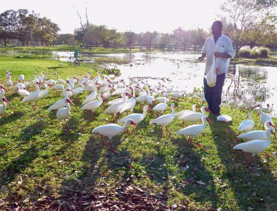 Venetian Gardens Park: Birdman