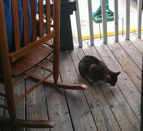 Thunderbolt, Georgien: Beggar Kitty