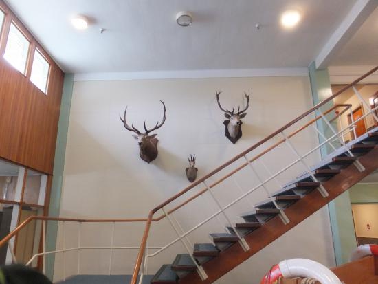 Mitre Peak Lodge: ホテルのロビー