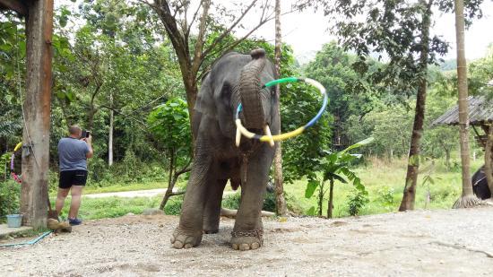 photo1.jpg - Picture of Phang Nga Elephant Park, Phang Nga ...