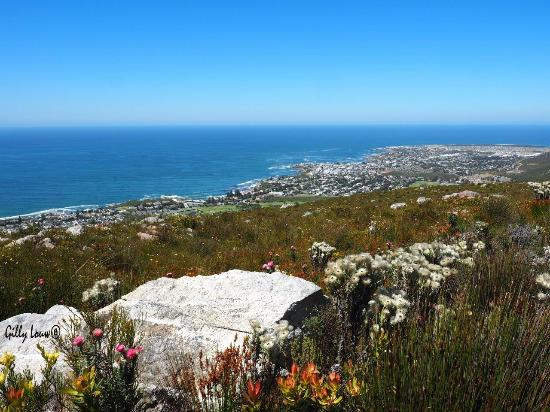 Hermanus, Güney Afrika: View from the top of the mountain