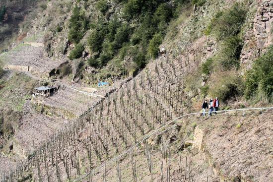 Klettersteig Calmont : De calmont klettersteig loopt door steilste wijngaarden van