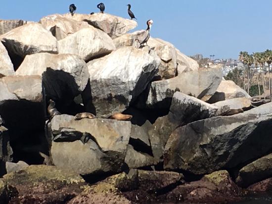 Dana Point, Kalifornia: photo1.jpg