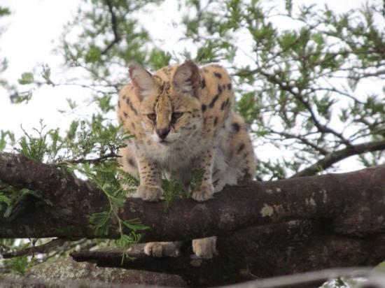 Leopard Walk Lodge: photo3.jpg
