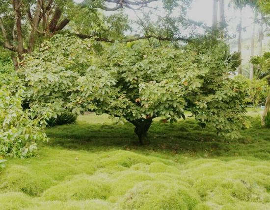 Sunnyside Garden St George 39 S Grenada Top Tips Before You Go Tripadvisor