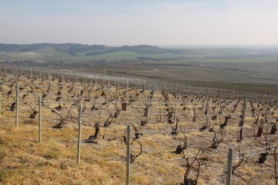 Mutigny, França: dans les vignes