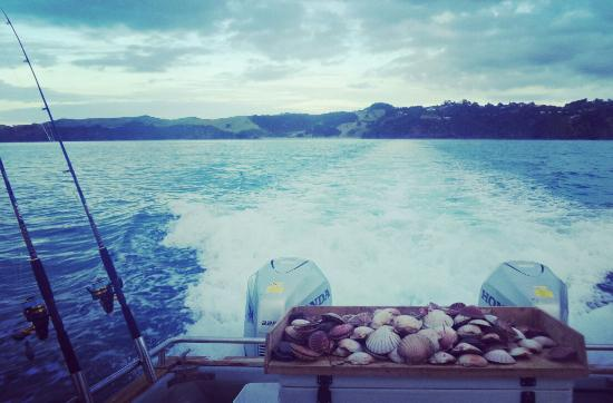 Isla Waiheke, Nueva Zelanda: We give the fish a break sometimes