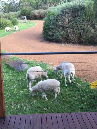 Tennessee Hill Chalets: Sheeps at the front door