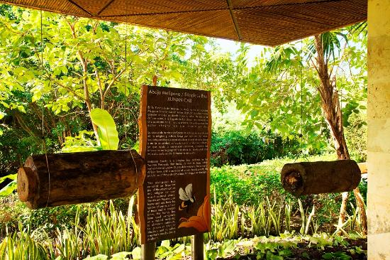 Fairmont Mayakoba: Melipona bee sanctuary