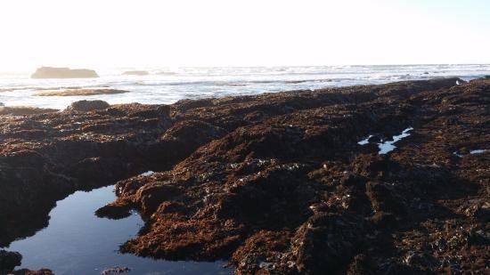 Moss Beach照片