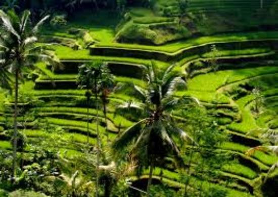 Ubud Bali Made Tour