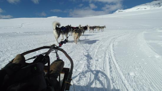 L'Alpe d'Huez, Francja: Dog sledding