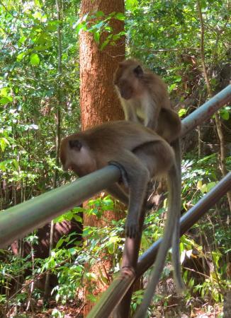 Lake of the Pregnant Maiden: Много диких обезьян.