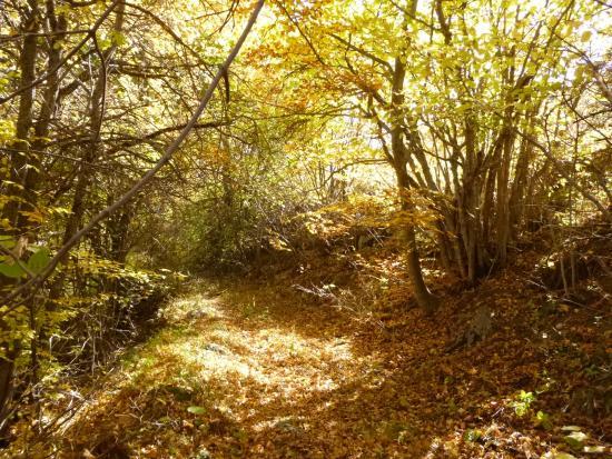Reallon, Frankrig: randonnée dans les bois