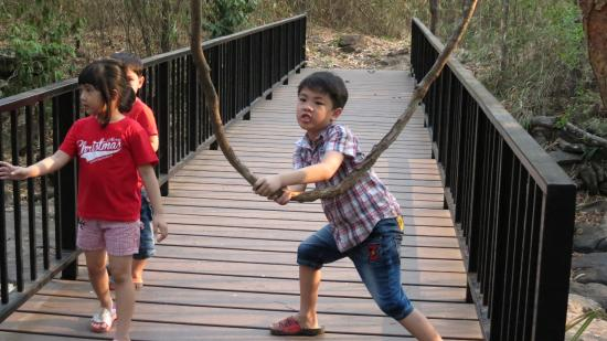 Phu Faek Forest Park: Trails, bridges, vines and all the things that kids and adventurists enjoy.