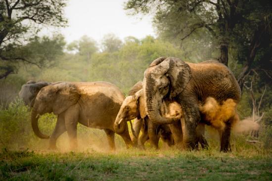 Singita Private Game Reserve Εικόνα