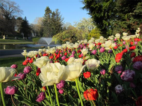 Newton, MA: Springs Tulips & Fountain