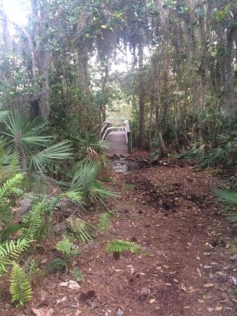 Port Saint Lucie, FL: Spruce Bluff Preserve