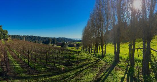 Soquel, CA: Amazing vineyard and views of Monterey Bay