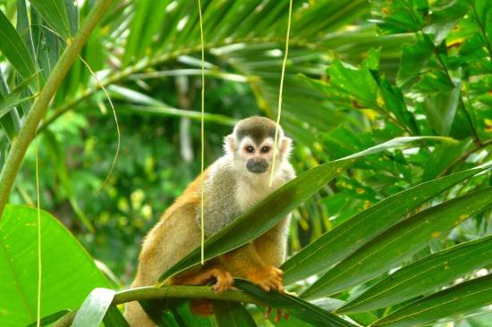 Golfito Monkey Tours