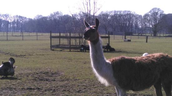 Wijhe, The Netherlands: IMAG5575_large.jpg