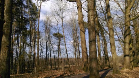 Wijhe, The Netherlands: IMAG5557_large.jpg