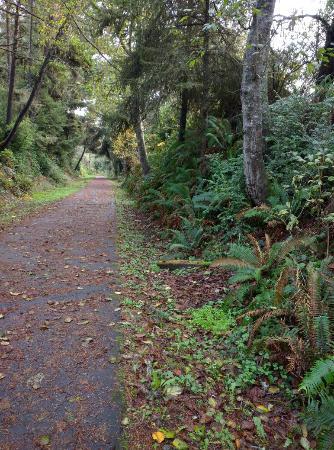McKinleyville, Kalifornien: Wooded section of the Hammond Trail
