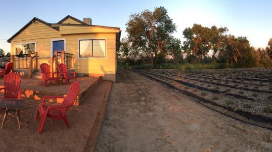 Belli Fiori Lavender Farm