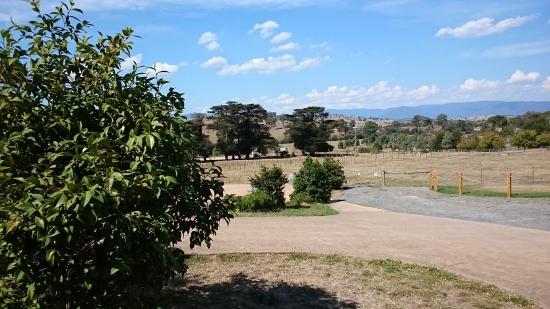 Yarra Valley Transfers - Wine Tours: Field