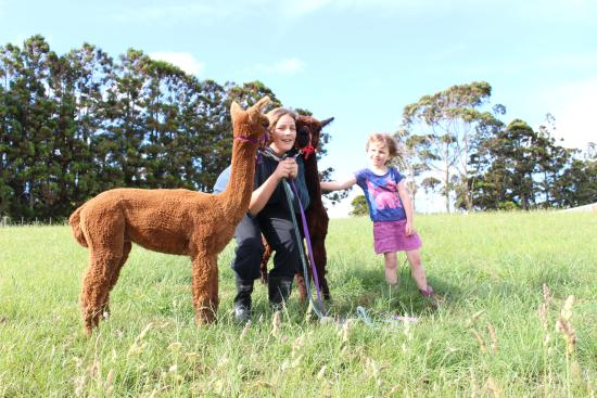 Waimauku, Nowa Zelandia: Get up close with Alpacas