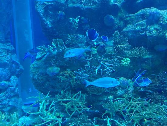 aquarium   Photo de Dubai Aquarium  u0026 Underwater Zoo, Duba u00ef   TripAdvisor