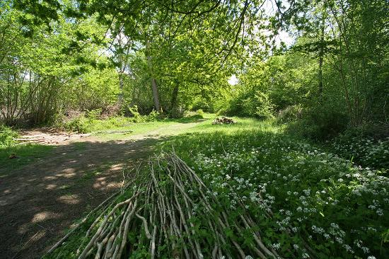 Bradfield Woods in the May sunshine. By Steve Aylward.