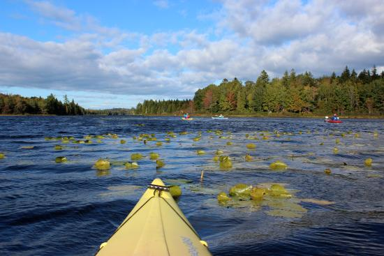 Machias, ME: Kayaking on Orange River