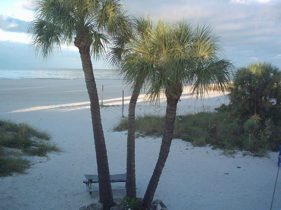Suncoast Motel: before sunrise, view from the room
