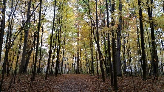 New Boston, MI: Fall at the Oakwood Metropark Nature Preserve.