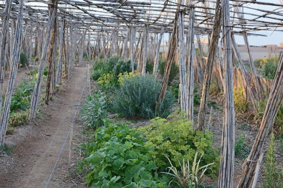 Jardin Oasis Ferme Picture Of Terre Des Etoiles Marrakech