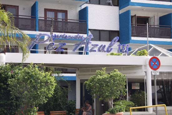 Pez azul fotograf a de apartamentos pez azul puerto de la cruz tripadvisor - Apartamentos pez azul tenerife ...