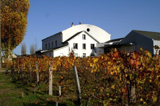 Restigne, Francja: La Cave des vins de Bourgueil