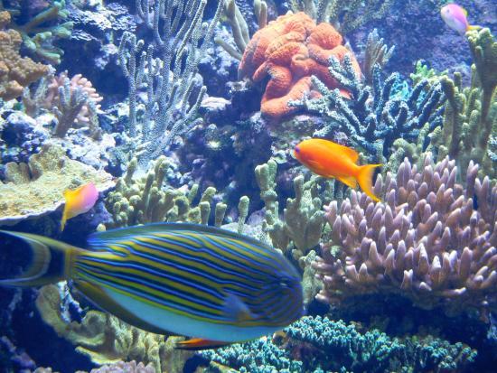 20150429 155204 Picture Of S E A Aquarium